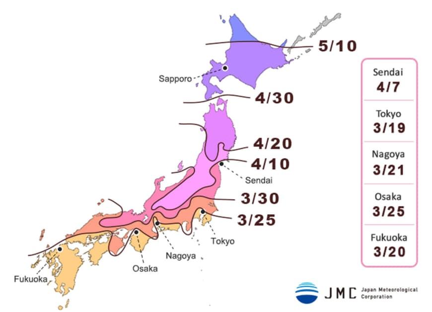 Зоны и время цветения сакуры в Японии