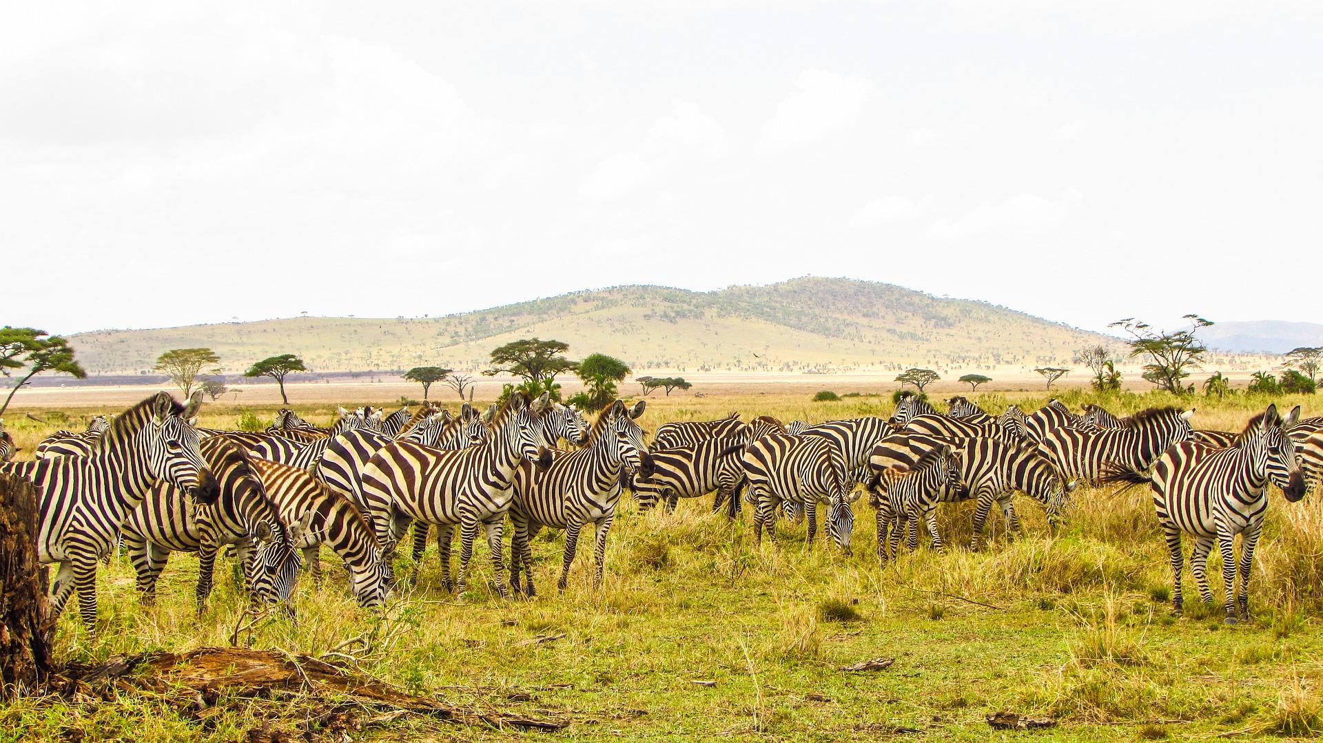 Тур-сафари в Танзании
