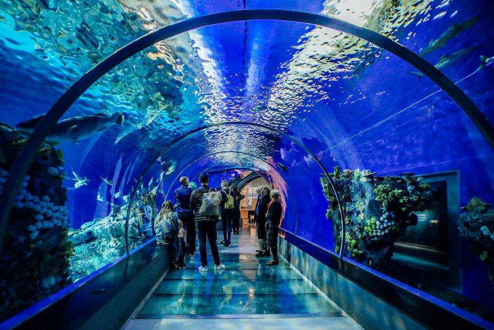 Тоннель в океанариуме Анталии