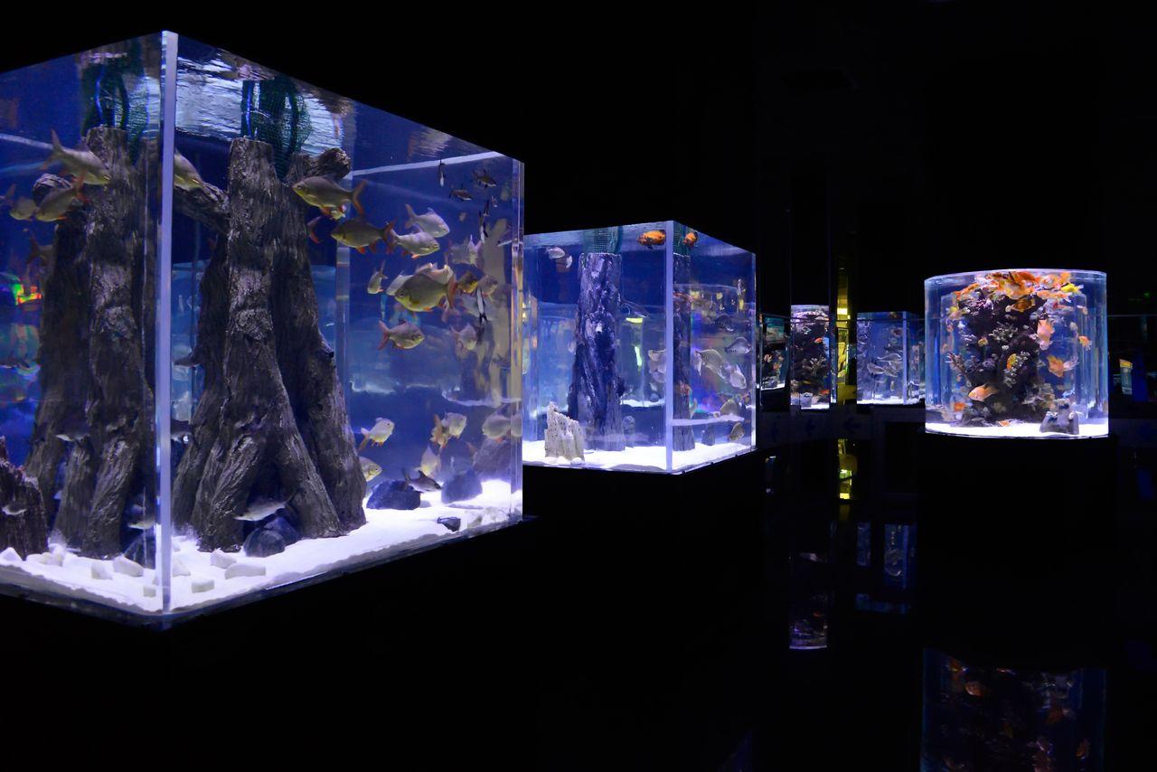 Аквариумы в океанариуме Анталии