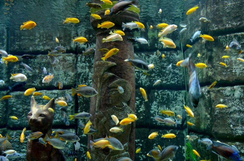 Рыбки в аквариуме Анталии