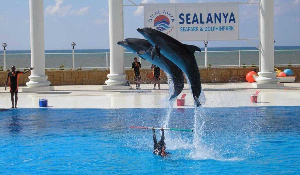 Дельфинарий в Sealanya