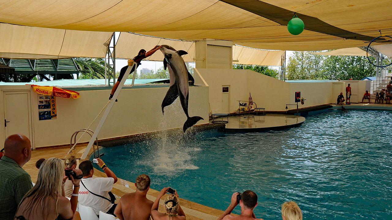 Выступление в дельфинарии Dolphin Aqua Land