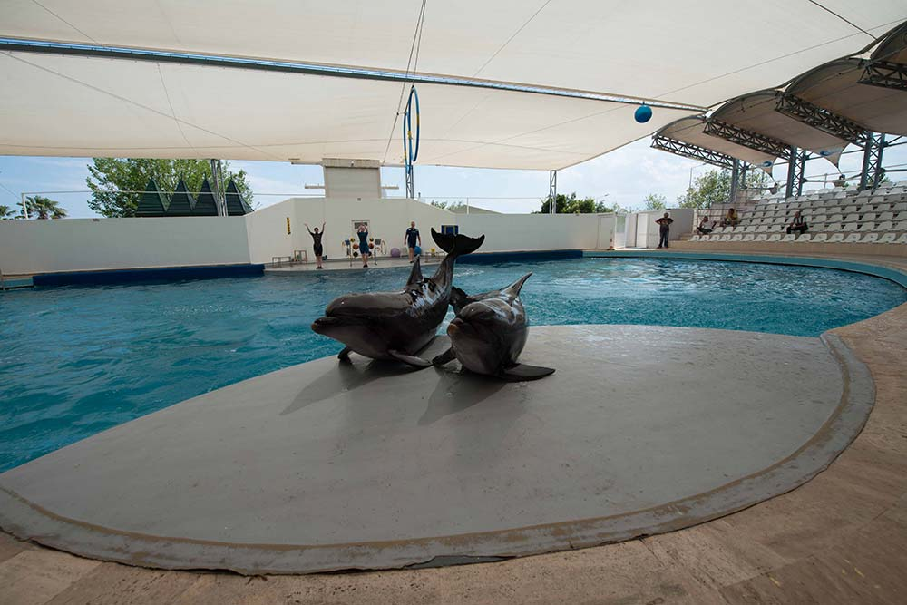 Дельфины в Dolphin Aqua Land