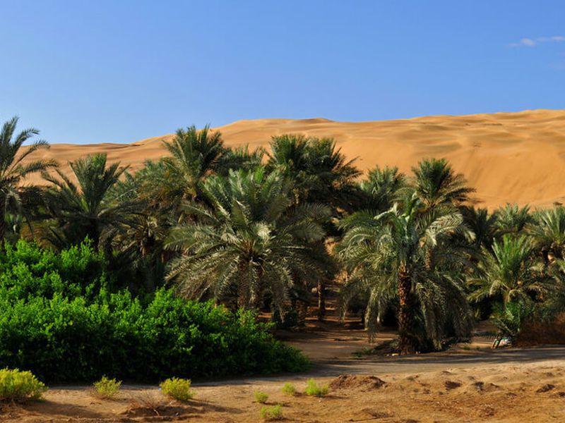 Оазис Лива в 150 километрах от Абу-Даби