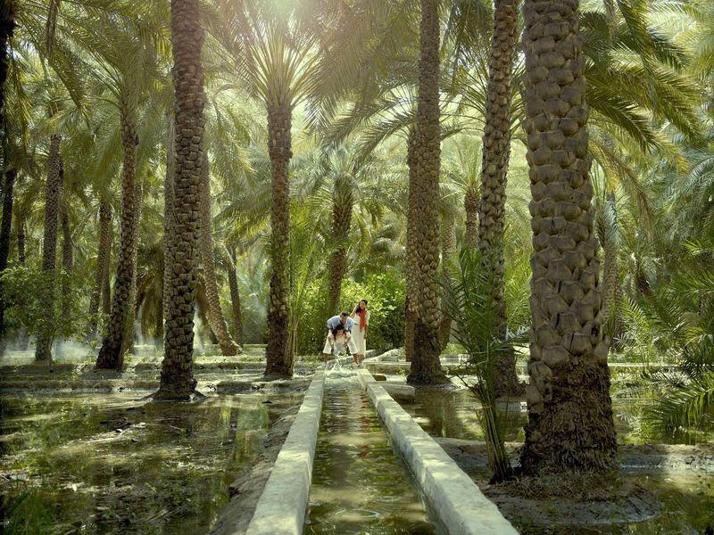 Сад в эмирате Аль-Айн