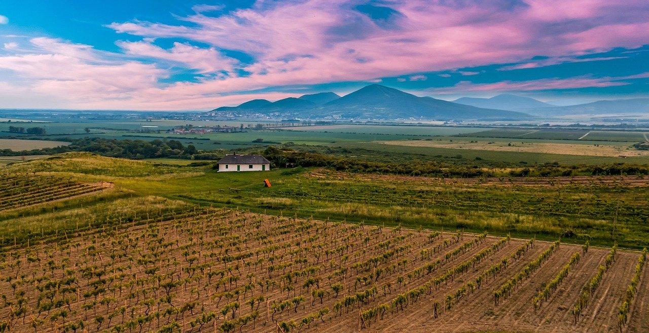 Винодельческий регион Токай